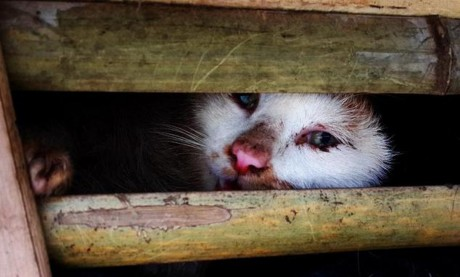 WTF?! Thousands of Cats Destined for Meat Market Apprehended in Vietnam Might be Sentenced to Death