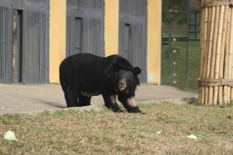 After 14 Years in a Cage, a Rescued Moon Bear Steps Outside